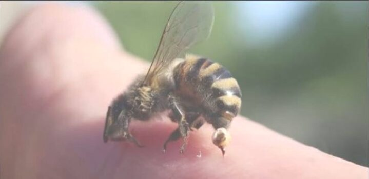 Arti Mimpi Digigit Lebah 25 Tafsir Psikolog, Mitos dan Primbon Jawa