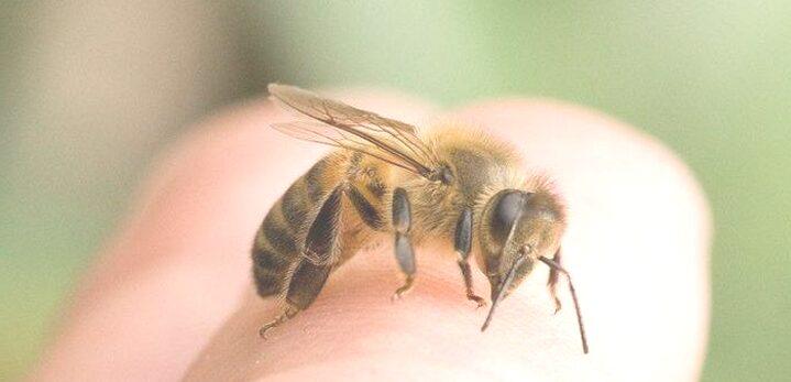 Arti Mimpi Digigit Lebah di Primbon Jawa