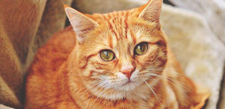 Arti Mimpi Dikejar Kucing 10 Tafsir Menurut Psikolog dan Primbon Jawa
