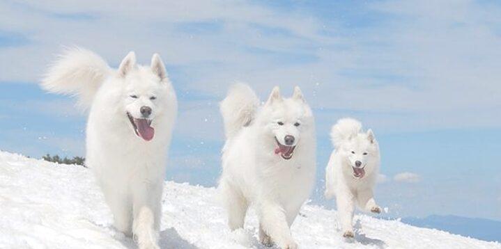 Makna Dikejar oleh Anjing Putih