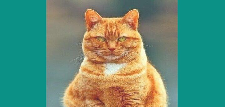 Makna Mimpi Dikejar oleh Kucing Menurut Primbon