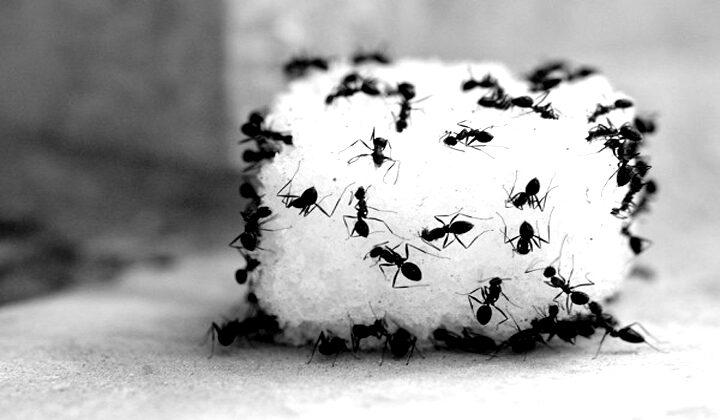 Arti Mimpi Dikerumuni Semut Menurut Primbon Jawa Serta Psikolog dan Ahli