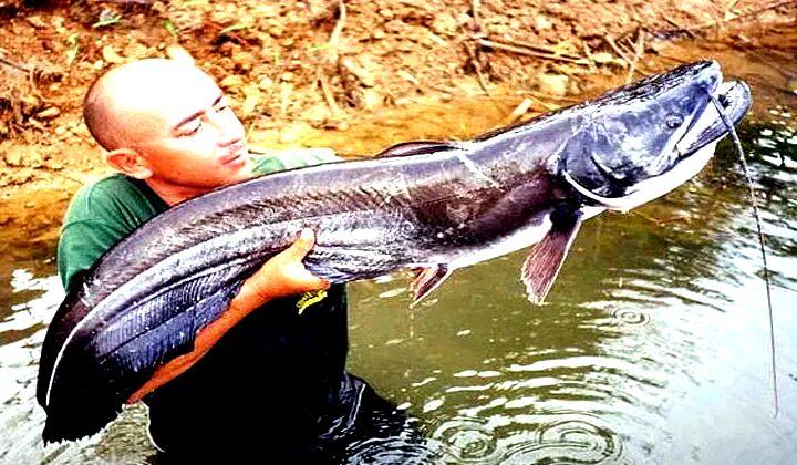 Mimpi Melihat Ikan Lele