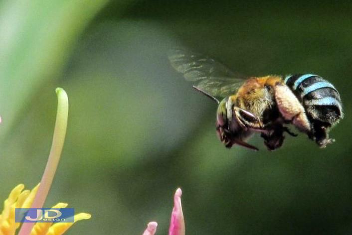 Arti-Mimpi-Dikejar-Lebah-1