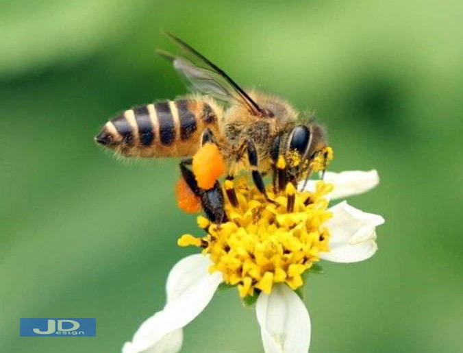 Arti-Mimpi-Dikejar-Lebah-2