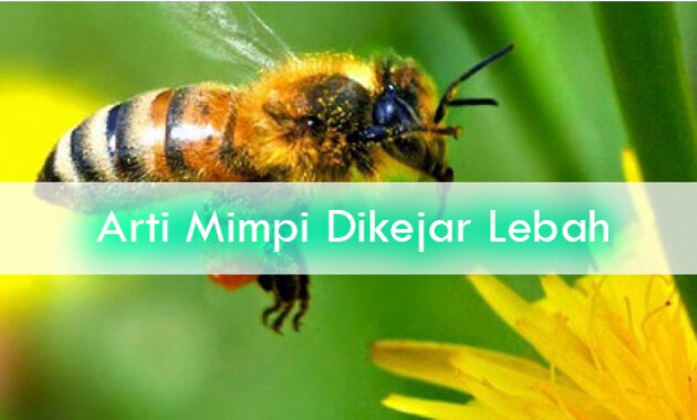 Arti-Mimpi-Dikejar-Lebah