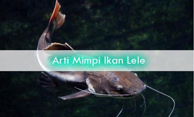 Arti-Mimpi-Ikan-Lele