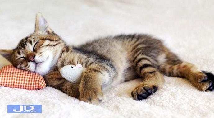Arti-Mimpi-Kucing-Masuk-Rumah-1